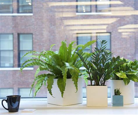 good plants for office 1000 ideas about office plants on pinterest best office