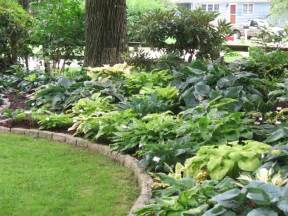 love all the hostas height variation from mounding the
