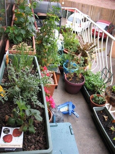 Special Edition Kebun Tanaman Mini Garden apartment gardening ideas container gardens for apartment