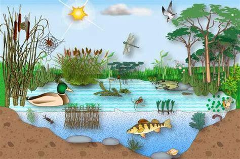 imagenes de ecosistemas naturales ecosistema