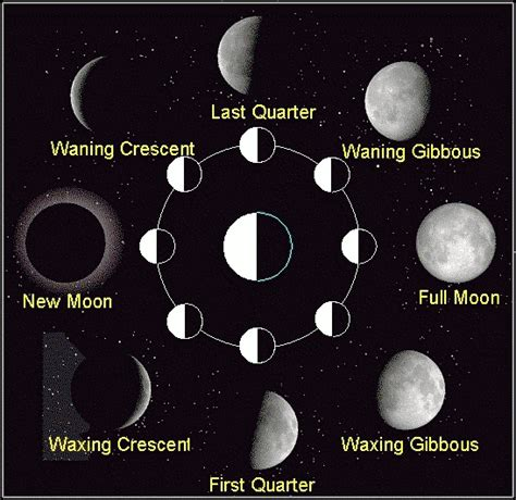 phases of moon diagram list the eight moon phases in order