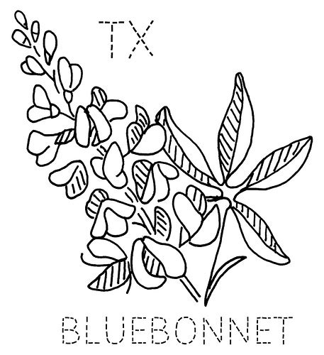 Bluebonnet State Flower Coloring Page Coloring Pages Bluebonnet Coloring Page