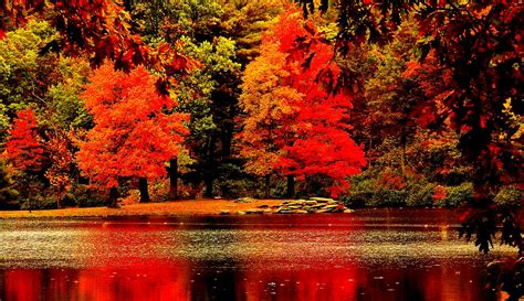 fall trees trees and fall on autumn nature fall trees reflection water hd wallpaper