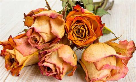 seccare fiori come far seccare i fiori in modo impeccabile leitv