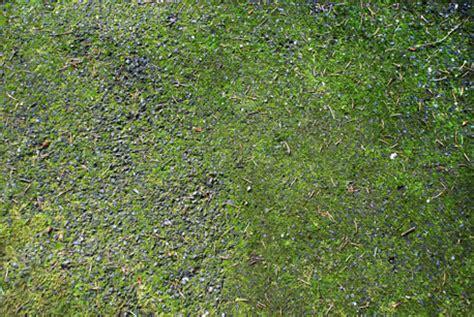 moss removal dl bravo landscape maintenance llc salem landscape maintenance salem lawn