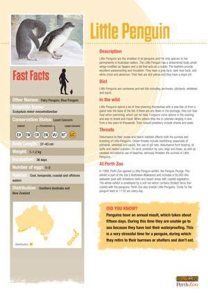 printable animal fact sheets 17 best images about infosheets infographs layout and facts