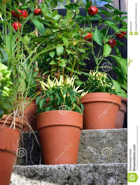 Container Vegetable Gardening Florida Fancy Design Ideas Florida Vegetable Gardening Remarkable