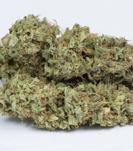 semi cannabis semi cannabis femminizzati