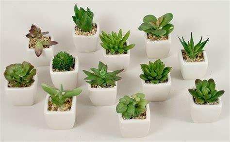 d appartamento le piante grasse da appartamento piante appartamento