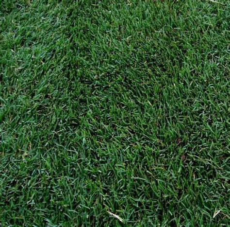 25 best ideas about lawn grass types on pinterest types of lawn grass grass seed types and