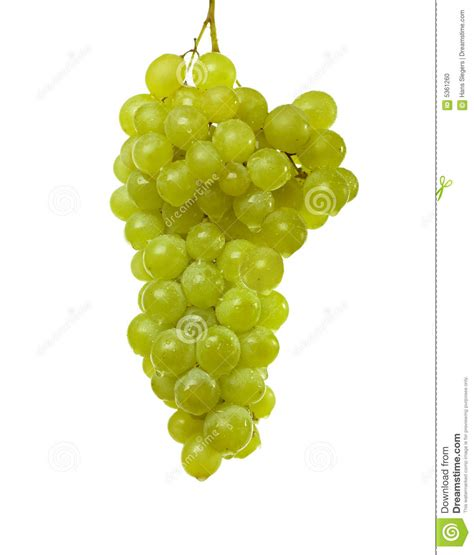 uvas blancas imagenes uvas blancas foto de archivo imagen 5361260