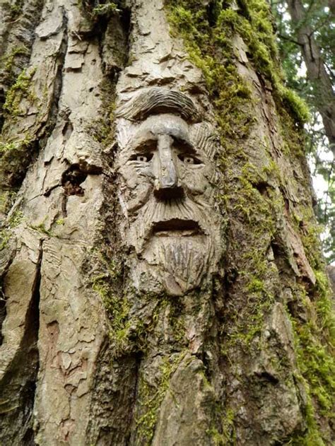 tree face 40 amazing tree carving exles for inspiration