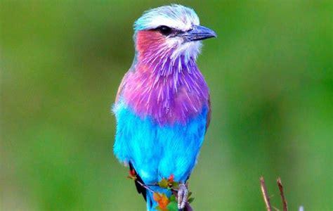 beautiful birds phots most beautiful birds in the world steemit