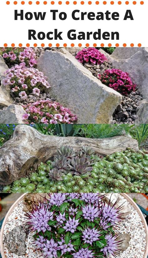 plants for rock gardens sun home outdoor decoration