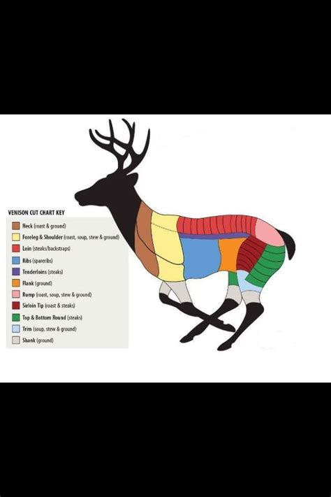 butchering a deer diagram venison butchering chart exactly what i was looking for