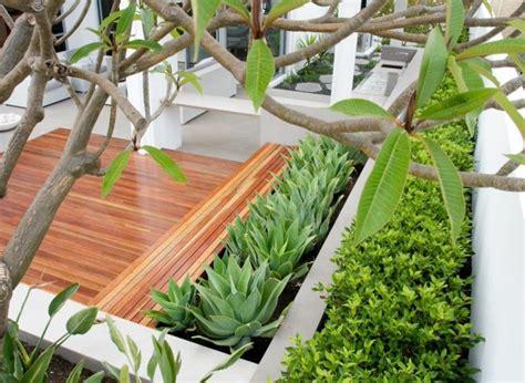 piante piccole da giardino piante da giardino idee per un nuovo look veramente originale
