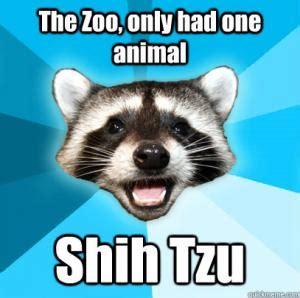 shih tzu zoo joke zoo jokes kappit