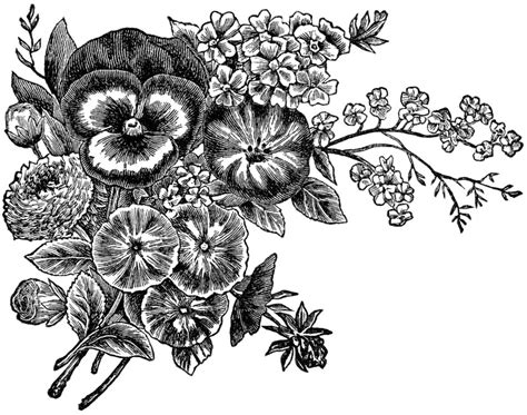bevalet s hummingbirds and flowers a vintage grayscale coloring book vintage grayscale coloring books volume 3 books flower clipart black and white clipartion