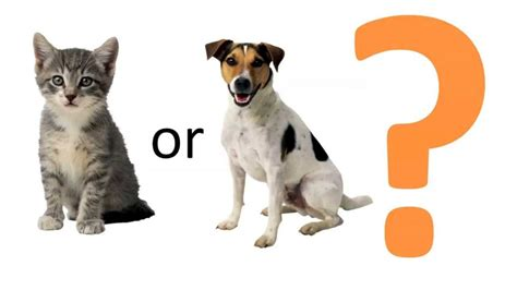cats or dogs are you a cat or a person experiment