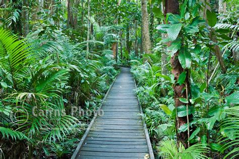 Cairns Botanical Garden Cpc0149 Cairns Botanical Gardens Cairns Photo Courses