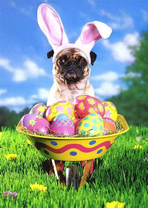 easter pug pictures pug with easter wheelbarrow easter card greeting card by avanti press ebay