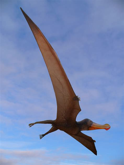 quetzalcoatlus wikipedia the free encyclopedia file ornithocheirus robustus 01 jpg wikipedia