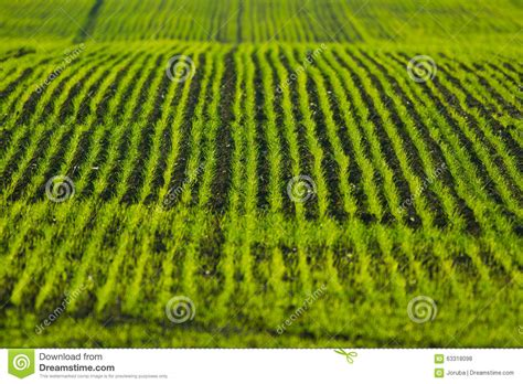green food field a royalty free stock photo from photocase agriculture field stock photo image 63318098