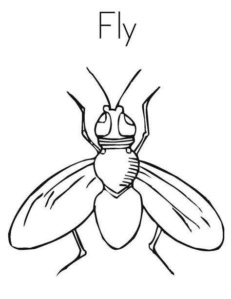 Fly Coloring Pages Images Reverse Search Fly Coloring Page