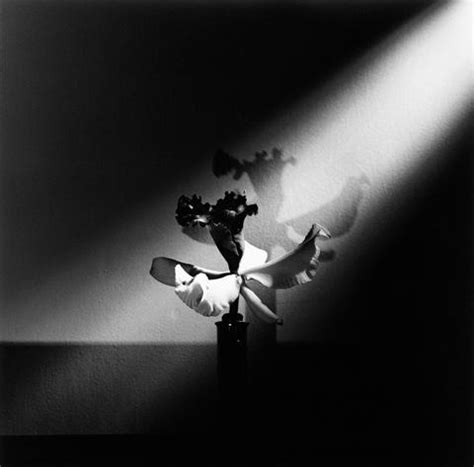 mapplethorpe fiori what photographers are for their pictures of