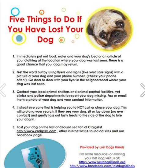 info about dogs lost do these 5 things asap info about cats dogs
