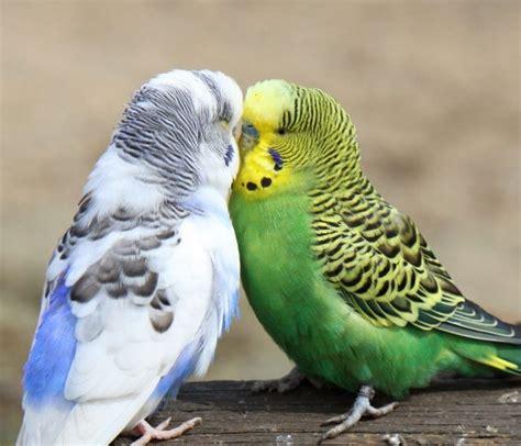 best pet birds for kids the pets central