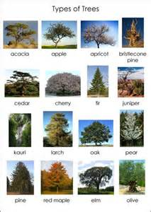 Type Of Trees by Different Types Of Trees With Names And Pictures Www