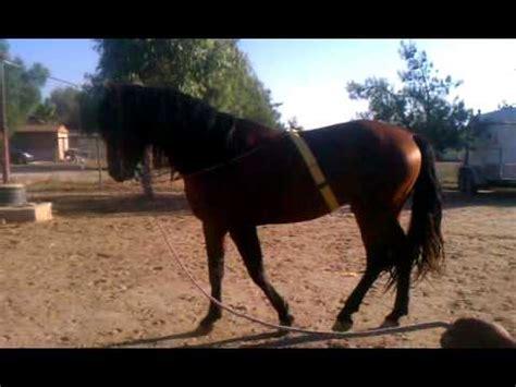 caballo azteca de venta en perris ca youtube