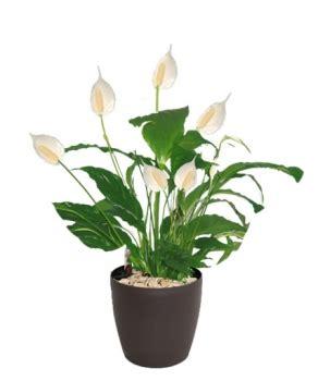 tr騁eau bureau plante pour bureau d coration bureau plantes