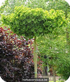 ginkgo biloba mariken 736 25 beste idee 235 n japanse tuin op japanse