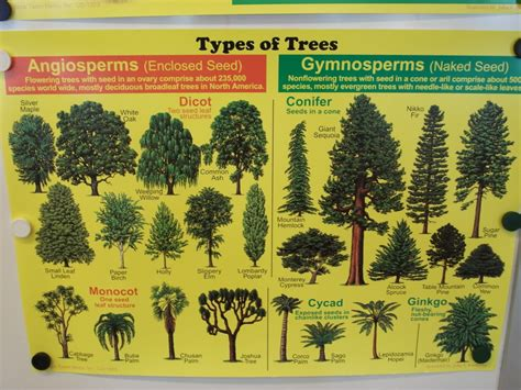 types of trees tree types natural adorable ness pinterest game concept