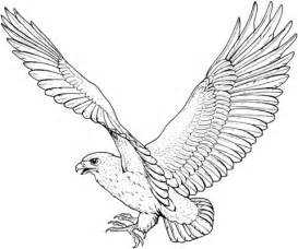 Hawk Coloring Pages hawk 5 coloring page supercoloring
