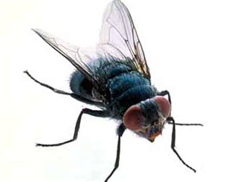 Free Insect, Download Free Clip Art, Free Clip Art on