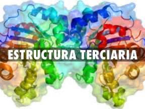 define cadena polipeptidica estructura de las proteinas by zoe shitha