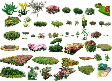 garden design plant layout landscape plants shrubs collection architectural