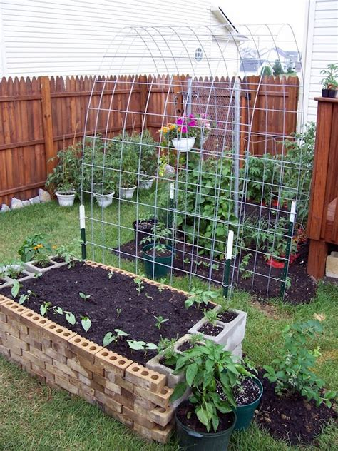 how to build a trellis for climbing plants garden trellis for climbing plants gardening stuff
