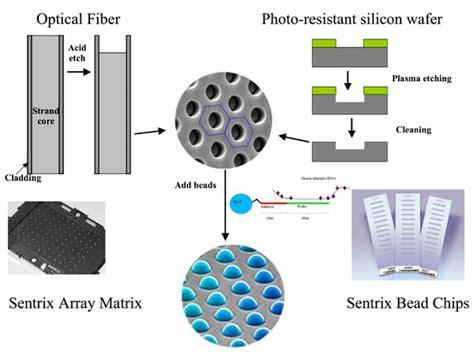 bead arrays how dna microarrays are built bitesize bio