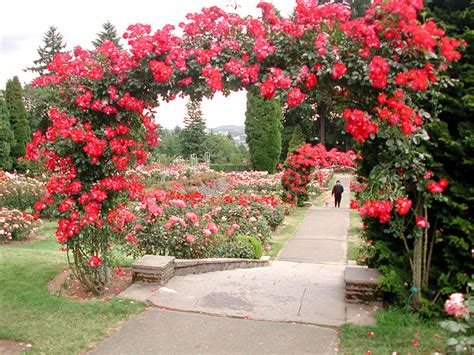 rose gardening awesome roses gardening ideas landscaping gardening ideas