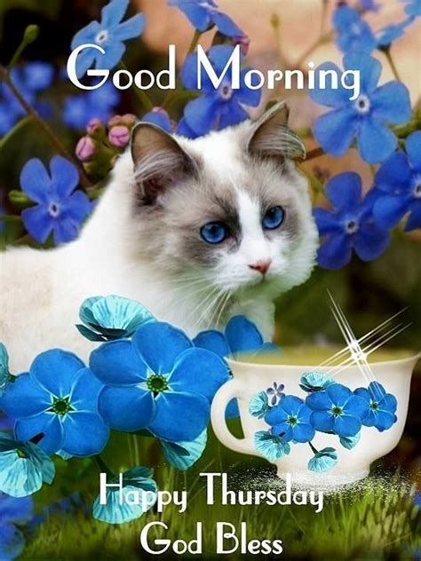 cute cat good morning happy thursday pictures