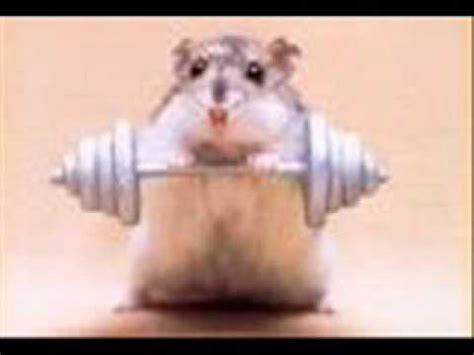 youtube music hamster dance hster dance song youtube