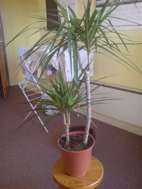 house plant identification identifying indoor plants houseplant identification house plants help with