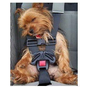 si鑒e auto pour chien transporter chien en voiture la bonne m 233 thode