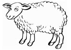 color sheep free free printable sheep coloring pages for