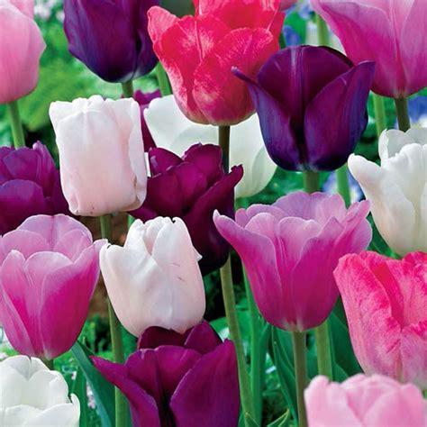 monets garden tulip mixture breckscom