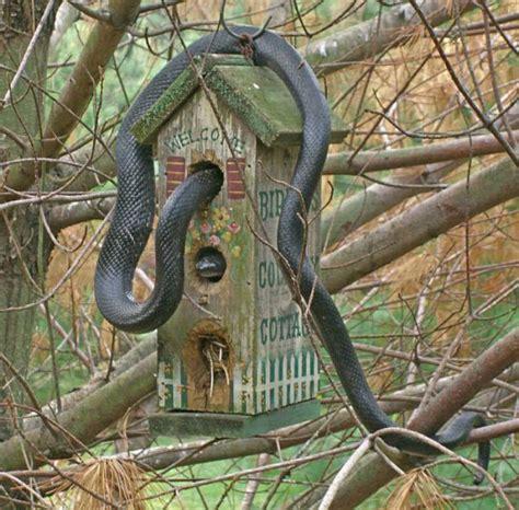funny bird houses